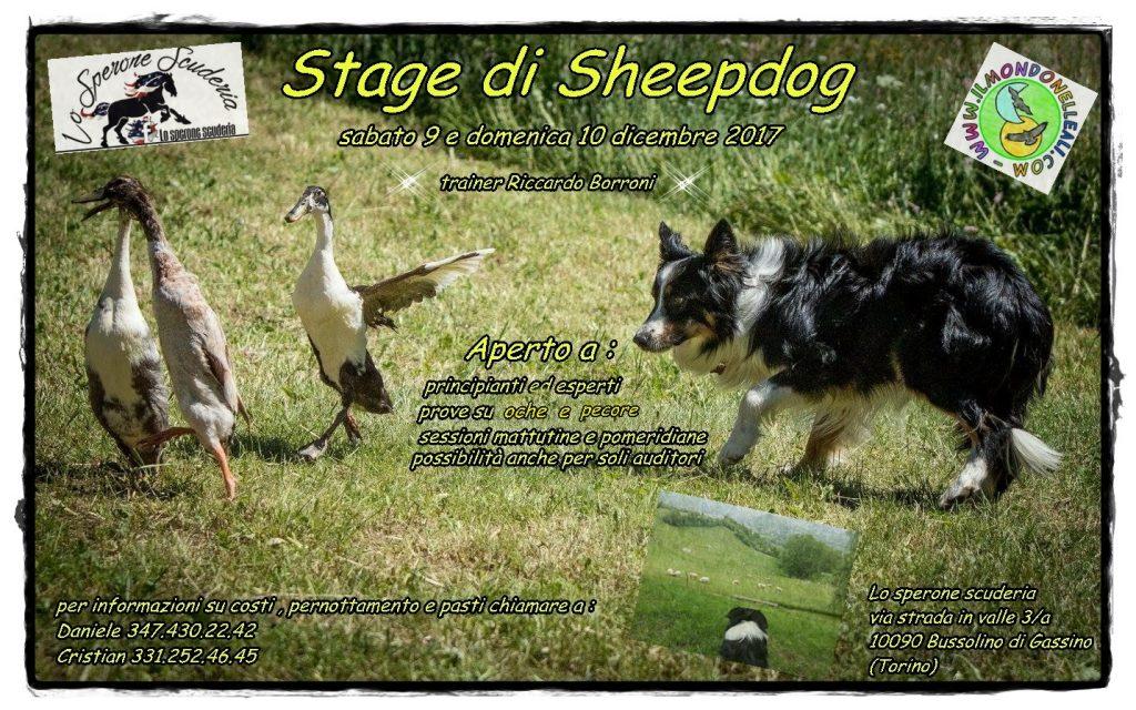 programma sheepdog