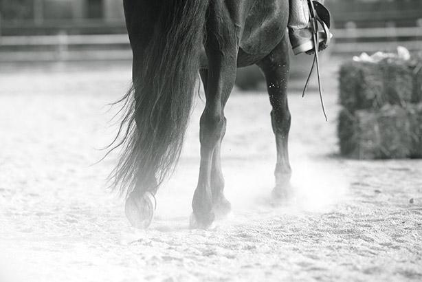 equitazione 02