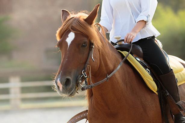 equitazione 03