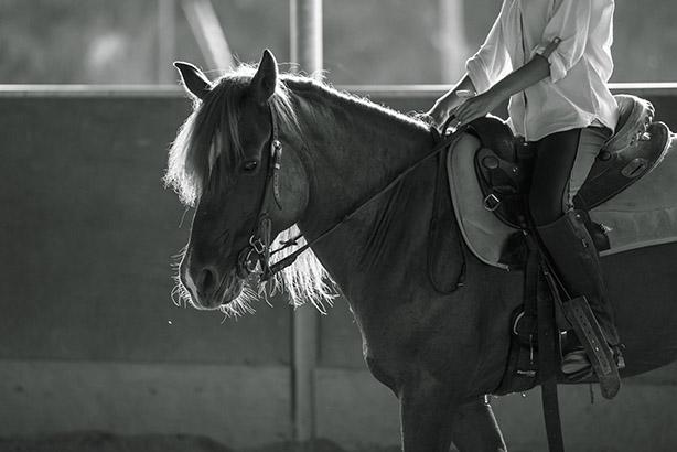 equitazione 04