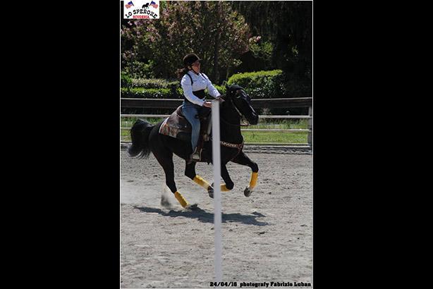 equitazione 08